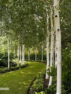birch tree lined garden path | Sandy Keys Photography