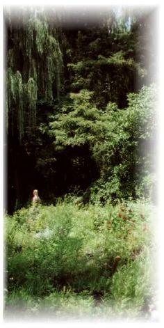 Elk Mountain Nursery Home (Asheville area) - trees, shrubs, natives.