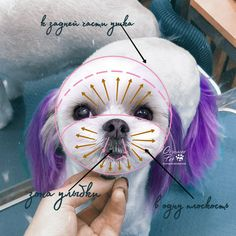 Dog Grooming Styles, Dog Grooming Salons, Dog Grooming Tips, Poodle Grooming, Perro Shih Tzu, Shih Tzu Puppy, Shih Tzus, Pet Shop, Shih Tzu Hair Styles
