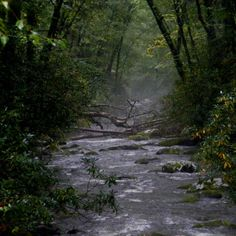 Cherokee North Carolina-This creek is one of the most breath taking places on the planet!