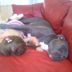 Yeah watch out!  Don't let those mean pit bulls near your kids.  They'll snuggle them to death.