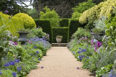 English garden with path between hedges and beds of flowers