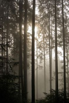 World's most haunted forests (great ones to choose from!)