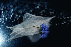 Journey to the Milky Way - Copyright ©Lafugue Logos All Rights Reserved.