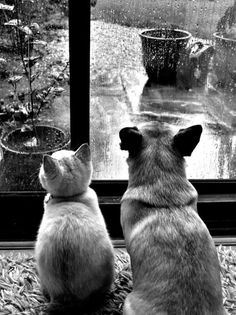 BFFs enjoying a rainy day together while warm and comfy. & BTW - while I love dogs too, I am clearly a cat person. &