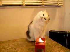 A cat plays the theremin. https://www.youtube.com/watch?v=mVLlVgyWhw4