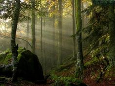 Magic Forêt de Brocéliande <3