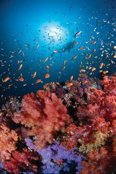 Be one with the sea life at Four Seasons Resort Maldives at Kuda Huraa. my future home!
