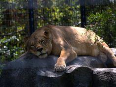 Blank Park Zoo, Des Moines
