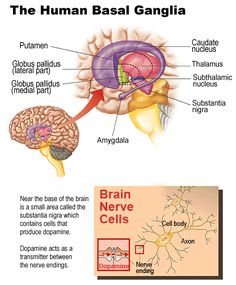 This is a picture of dopamine and the brain.