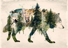 wolf nature landscape earth tribal america wild trees tree forest mountain mountains camping dog eagle baldeagle deer horns watercolor photo collage montage doubleexposure green brown natural wildlife life animals animal sky modern hipster painting texture style emotional emotion walk fly outdoors retro vintage wolves creatures waterfall