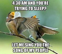 Let me play the song of my people...