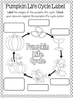 Worksheets Life Cycle Of A Pumpkin Worksheet life cycle of a pumpkin worksheet printout enchantedlearning com