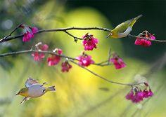 #892 小綠芒逆 | Flickr - Photo Sharing!