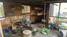 Vivarium, Bunny Hutch, Dance Decorations, Hurricane Lamps, Stained Glass Lamps, Own Home, Decor Styles, Pergola, Household