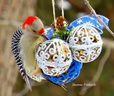 Making Holiday Ornaments Which are Strictly for the Birds! | Macaroni Kid
