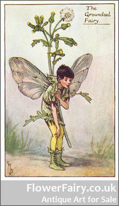 Antique Groundsel Flower Fairy Print.