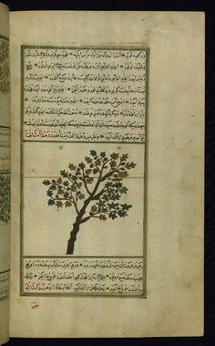 This illustration depicts a fig tree (tīn). Wonders of Creation by Qazwīnī 1293 was translated to Turkish in 1717  completed by Rūzmah-ʾi Nāthānī - W659