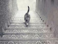 Spending a ton of time trying to figure out an optical illusion is pretty common for most of us. But while they can be pretty tough to crack,. Create Your Own Story, Pretty Tough, Cat Walk, Optical Illusions, Photo Manipulation, Mind Blown, Salvador, Cats Of Instagram, Cute Cats