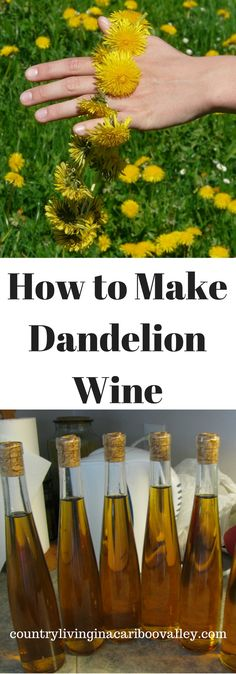A wonderfully light homemade wine - Dandelion Wine! Step by step instructions to make wine. Full recipe for Dandelion Wine. Homemade Wine Recipes, Homemade Alcohol, Homemade Wine Making, Drink Recipes, Dandelion Recipes, Dandelion Wine, Make Your Own Wine, How To Make Wine, Wine Magazine