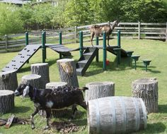 15 Goat's Playground Ideas For Your Farm | Farm Cradle