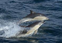 Wildlife trips on Scilly Islands