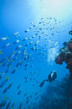 Diving the Great Barrier Reef, Australia