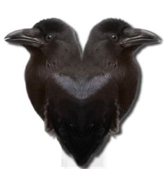 Ravens Wyrd--good source for meditation, runes, chakras, etc.  And, based on Odin's ravens, Hugin and Munin (Thought and Memory)~bonus!