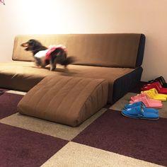 ローソファ専門店 HAREM / 当店では定期的にペットイベント「愛犬とローソファを試してみよう!」を開催しています。高いソファからの飛び降りを繰り返すと、ワンちゃんの足腰に負担がかかりケガや病気の原因になることも。座面の低いローソファで、愛犬とゆったり安心しておくつろぎくださいませ。