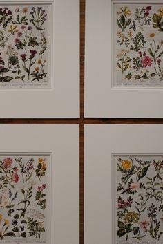 Framed Botanical Prints found in old encyclopedias