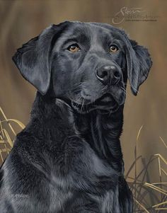 Sporting Dog Paintings Sporting Dog Paintings by Scot Storm - Sporting Dog…