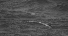 Verão da lata. Em Ipanema, banhista tenta pegar uma das 15 mil latas recheadas de maconha jogadas ao mar pela tripulação do navio Solana Star, que levava 22 toneladas da droga da Austrália para os EUA