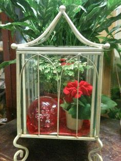 Amazing Indoor Plant Decoration: Excellent Indoor Plant Care Interior Cloches And Terrariums Plants With Adorable Contemporary Glass Cage And Metal White Framework Decoration Inspiration ~ boholmain.com Decoration Inspiration