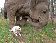 unconditional friendship......
