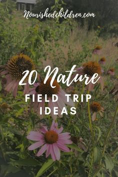 20 Nature Field Trip Ideas - Home Schooling İdeas Travel Activities, Science Activities, Forest School Activities, Preschool At Home, Preschool Education, Virtual Field Trips, Experiential Learning, Nature Journal, Nature Study