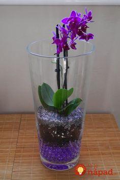 orchids b q Orchid Terrarium, Terrarium Plants, Mini Orquideas, Orchid Fertilizer, Orchid Flower Arrangements, Growing Orchids, Orchids Garden, Purple Orchids, Orchid Care