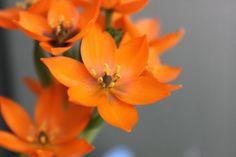 pretty orange flowers