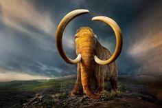 мамонты фото: 10 тыс изображений найдено в Яндекс.Картинках