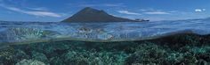 Bunaken, lovely paradise island and awesome diving! Paradise Island, Scuba Diving, Whale, Colours, Awesome, Animals, Outdoor, Diving, Outdoors