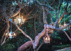 Wedding chandeliers lighted and hanging in the trees #wedding #chandeliers
