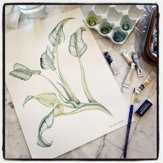 🌿🎨 #marinabarbato #watercolor #watercolour #aquarela #plantillustration #surfacedesign #designtextil #designdesuperficie #printedtextile #estampa #estampatropical #tropicalprint