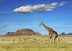 Tanzanie en famille et Zanzibar - VOYAGE FAMILY