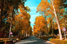 Autumn Colours by AIDA DZAKULIC on 500px