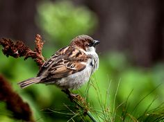 Birds of all kinds are vanishing as a result of human impact on the environment: Sparrow. Beautiful Images, Animals Beautiful, Bird Species, First World, Environment, Around The Worlds, Birds, Instagram, Cutest Animals