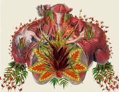vintage anatomy collage | Travis_Bedel_anatomical_Collage_Art_Trend_Botanical_Studies_08