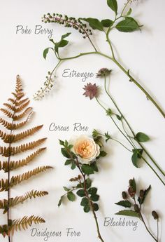 Blooms in Season: July - Sacramento Street Types Of Flowers, Beautiful Flowers, Cut Flowers, Flower Names, My Flower, Spring Wedding Flowers, Wedding Bouquets, Flower Meanings, Botanical Wedding