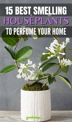 Easy House Plants, House Plants Decor, Garden Plants, Indoor Plants, Inside Garden, Inside Plants, House Smell Good, Home Vegetable Garden, Bedroom Plants