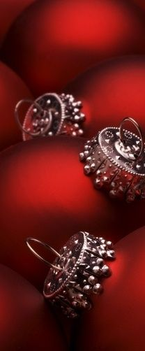 The beauty of Christmas red~❥