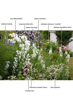 ideas for planting