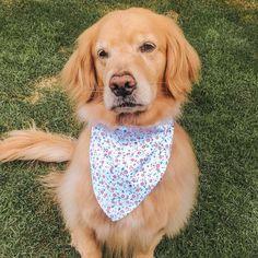 Fun Spring and summer accessory birthday Rainbow Sprinkles Over the Collar Dog Bandana